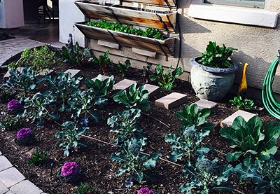 Free hands-on gardening classes!