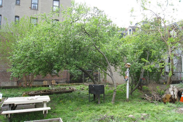 bronx-community-garden-before