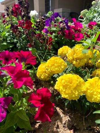 9.20.19 Edible Flowers