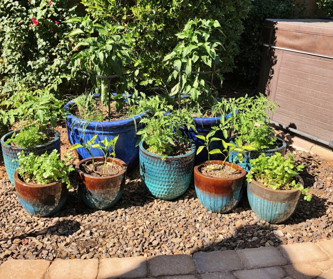 Perfect Plants For Patio Gardening Agriscaping