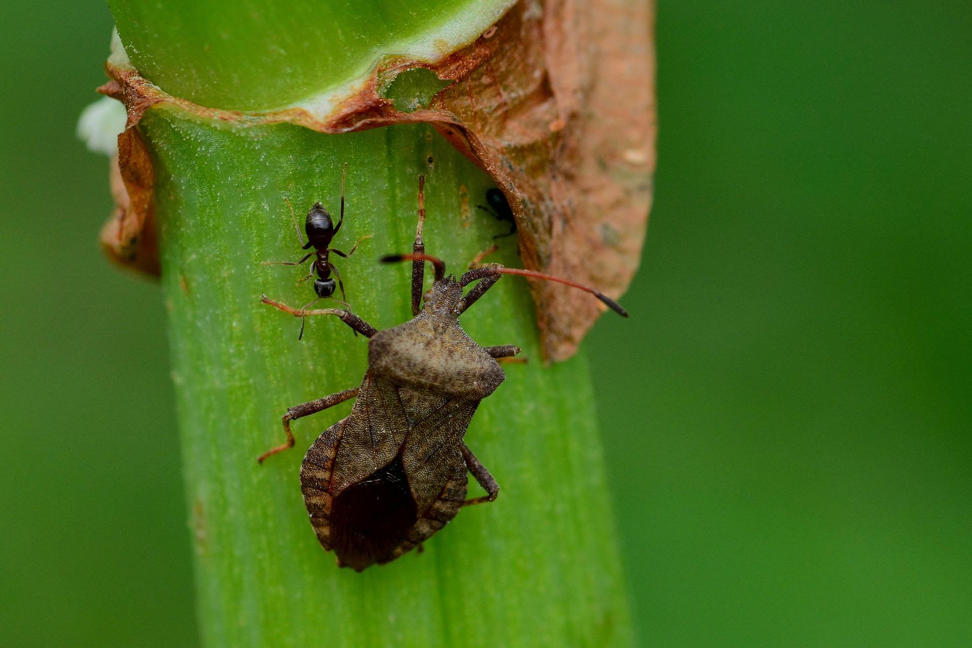 leaf-bug-4243972_1920