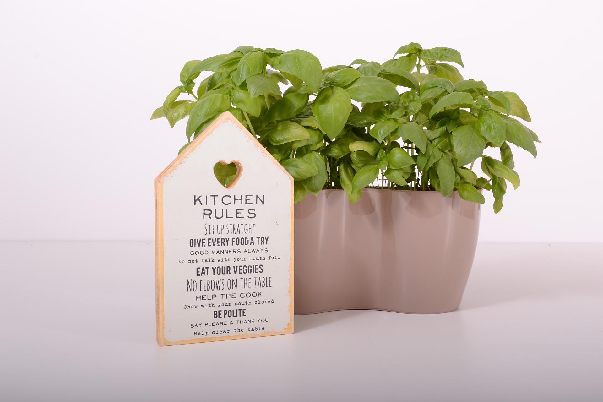 plants-2793904_1920