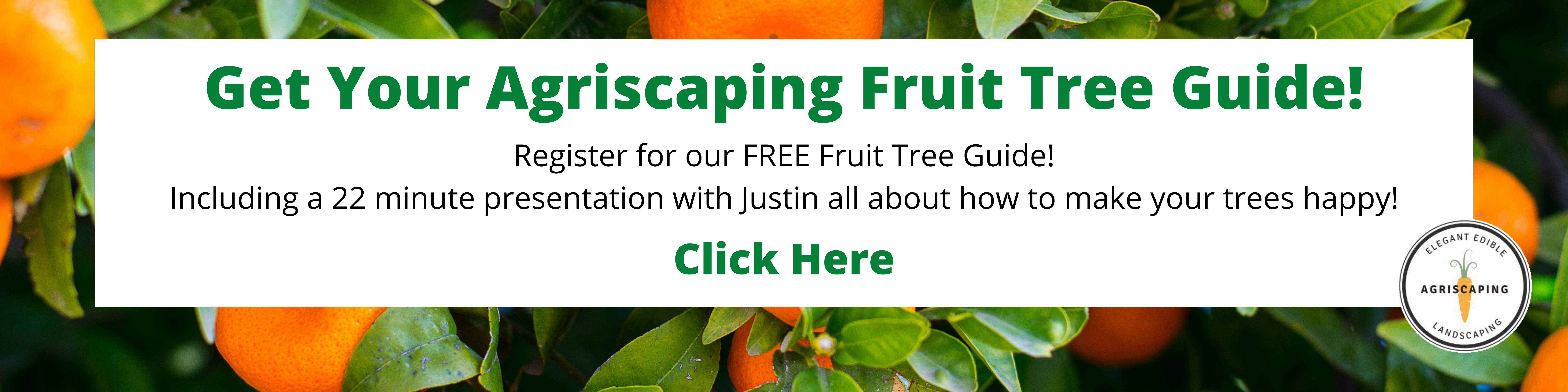 Fruit Tree Guide (1)